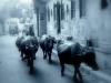 The Indefinite Journey - Stock Photo